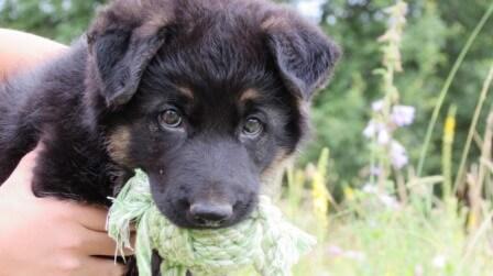 Как отучить щенка кусаться от dogrf.ru