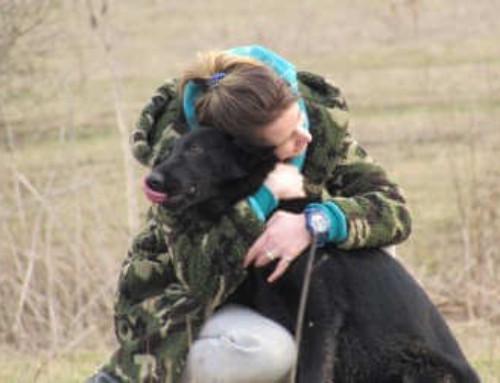 Воспитание щенка немецкой овчарки Рокки