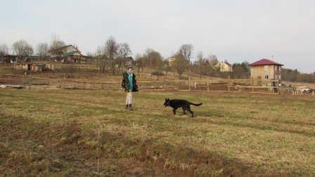 Воспитание щенка немецкой овчарки Рокки от DOGrf.ru