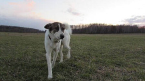 Уход за собакой - статья от dogrf.ru