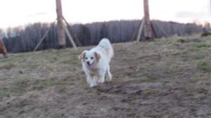Что делать если течка у собаки - статья от dogrf.ru