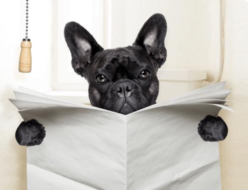 Вредные советы начинающего собаковода