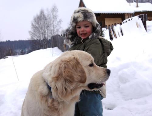 Зимнее утро в собачьей деревне 2018