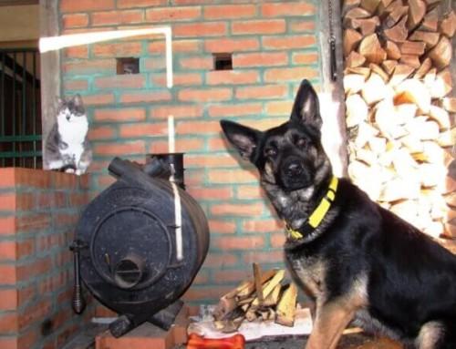 Опасности в доме для собаки