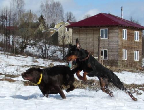 Составляющие темперамента рабочей собаки