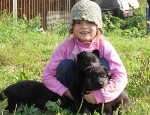 Этапы взросления щенка