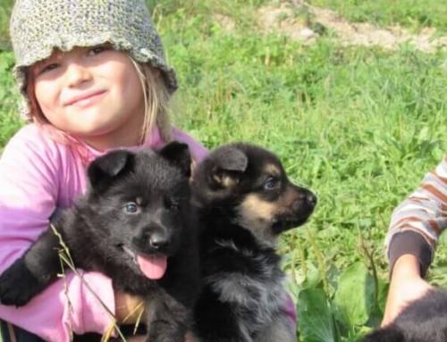 Выбор щенка и всё с этим связанное