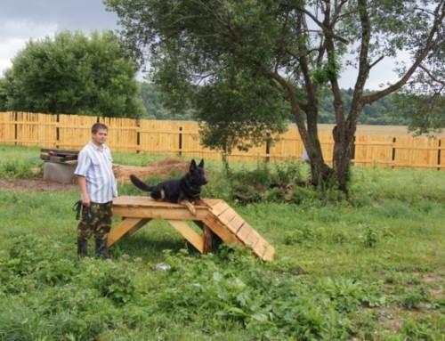 Прогулки с Ахтаром немецкая овчарка