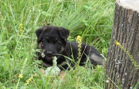Помощь в выборе щенка и породы
